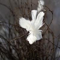 Fjäder Blom 12pc - Vit