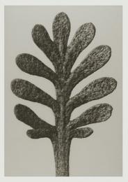 Blossfeldt kort med kuvert 12x17 cm - Achillea Umbellata