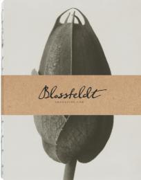 Blossfeldt anteckningsbok, 21x27 cm - Cosmos Bipinnatus