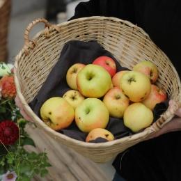 Fruktkorg - 35x17cm
