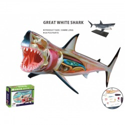 ANIMAL ANATOMY SHARK 20pcs 30cm