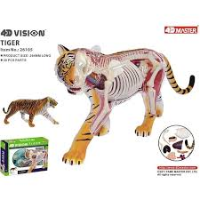 ANIMAL ANATOMY TIGER 28pcs 37cm