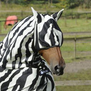 Bucas flughuva zebra