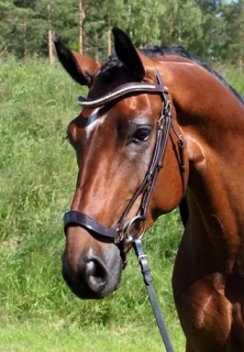 Glengordon Ariel träns med lackad nosgrimma