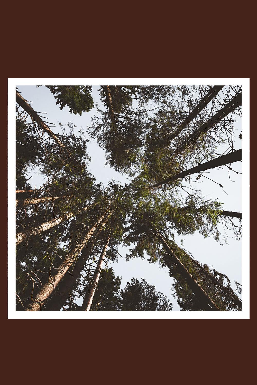 Print Trees 100x100cm
