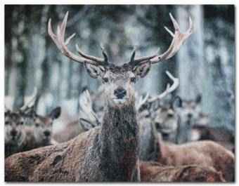 ABS matta hjort