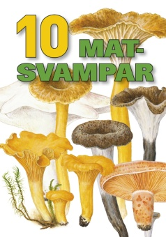 10 matsvampar