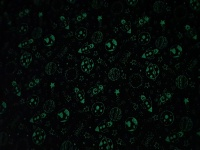 Glow-in-the-dark Space trikå