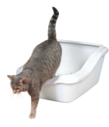 Kattlåda Cleany Cat m kant, 45 x 21 (29) x 54 cm, vit
