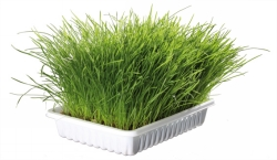 Mjukt kattgräs 100g m.skål