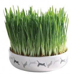 Kattgräs med  keramikskål 15x4cm ca 50g
