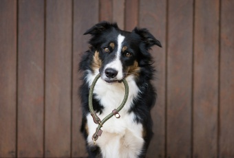 M&S Infinity Retriever Collar