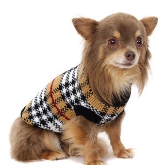 Urban Pup Autumn sweater