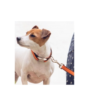Brott Solid Orange leash