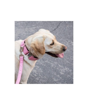 Brott Solid Pink Gum leash