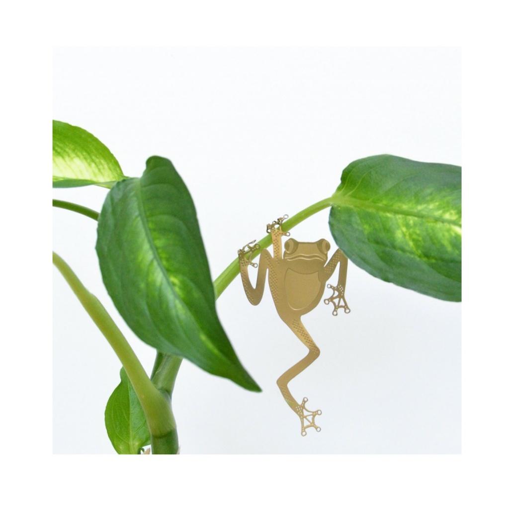Another Studio Plant Animal Tree Frog