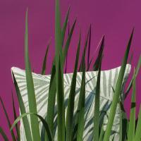 Nina Kullberg Kudde Palm Springs Alfalfa