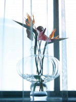 Louise Roe Balloon Vase 03 Clear
