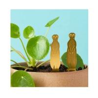 Another Studio Plant Animal Meerkat