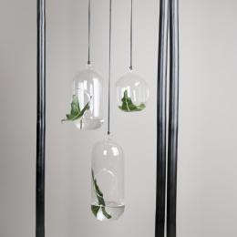 DBKD Glasampel/Hanging Glass Pot