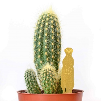 Another Studio Plant Animal Meerkat