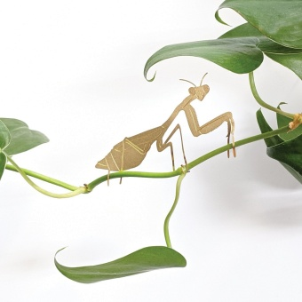 Another Studio Plant Animal Praying Mantis