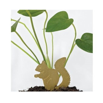 Another Studio Plant Animal Squirrel