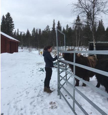 Uppladdning med gårdsarbete