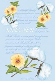 Doftpåse - White Cotton