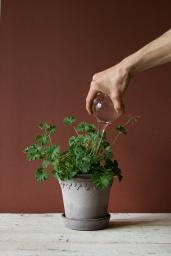 Självbevattnare för krukväxter