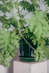 Kruka Köpenhamn Grön 18cm
