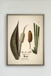 Diplothemium