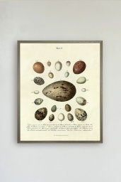 The Eggs Print No.2