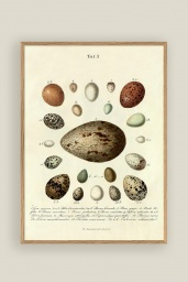 The Eggs Print No.2 30x40cm