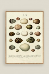 The Eggs Print No.1 30x40cm