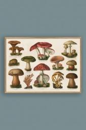 Mushrooms 50x70cm