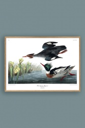 Red Breasted Merganser 50x70cm
