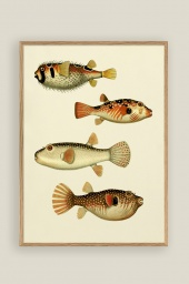 The Fishes Print 50x70cm