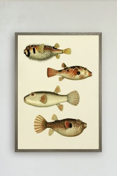 The Fishes Print