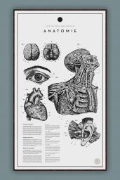 Anatomie №.2