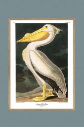 White Pelican 70x100cm