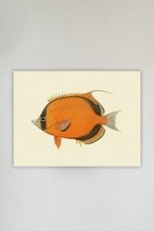 Ninja Fish