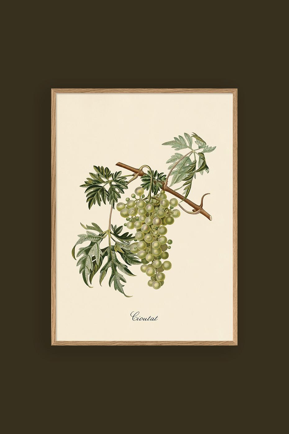 Green Grapes 30x40cm