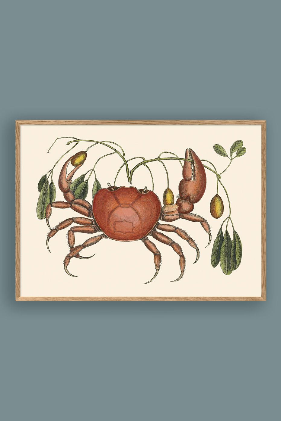 Crab And Tapia Branch 50x70cm