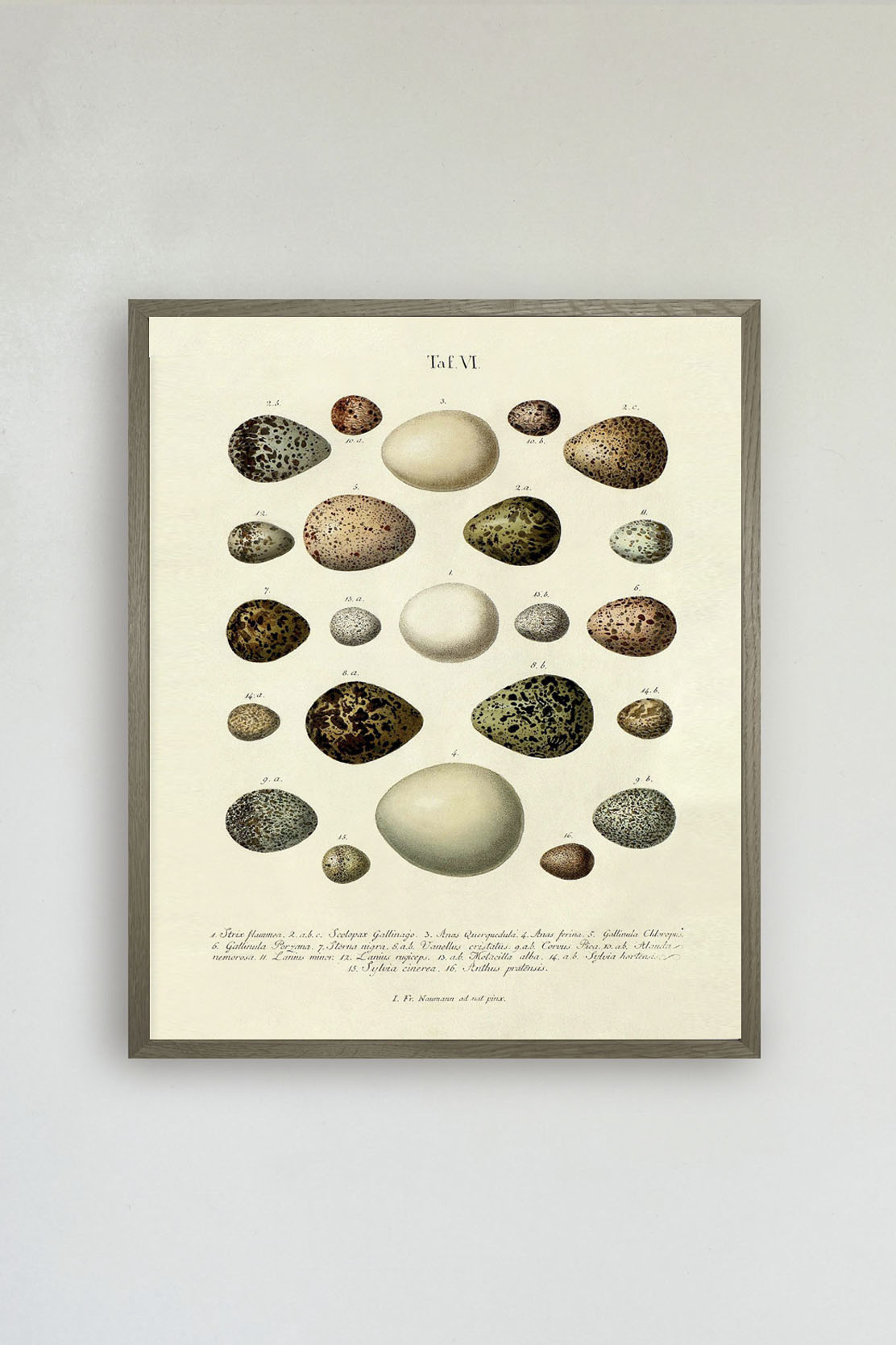 The Eggs Print No.1