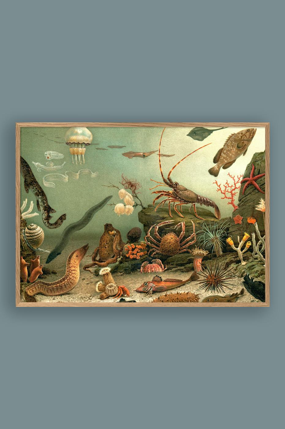 Aquarium 50x70cm