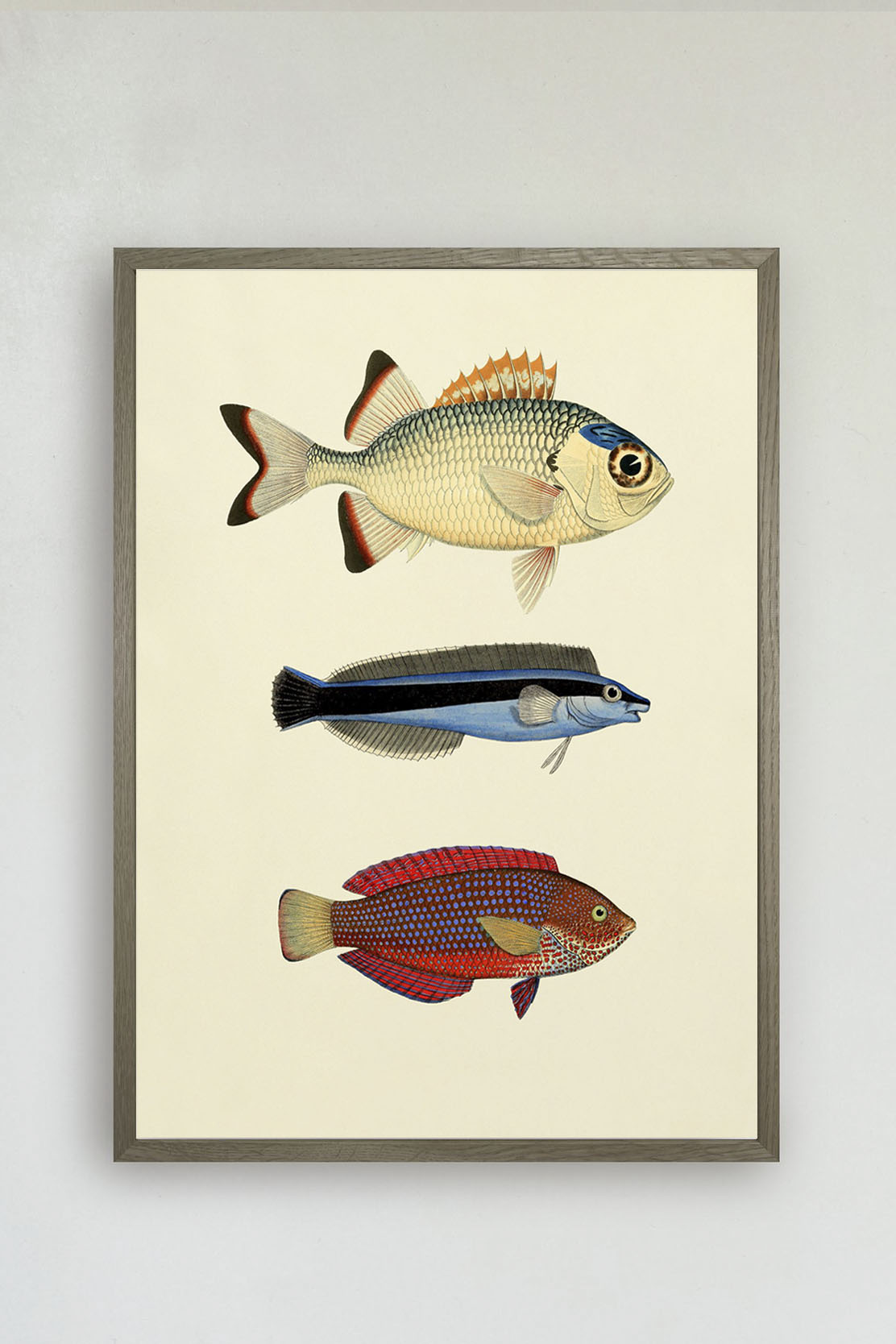 The Fishes Print #3906P