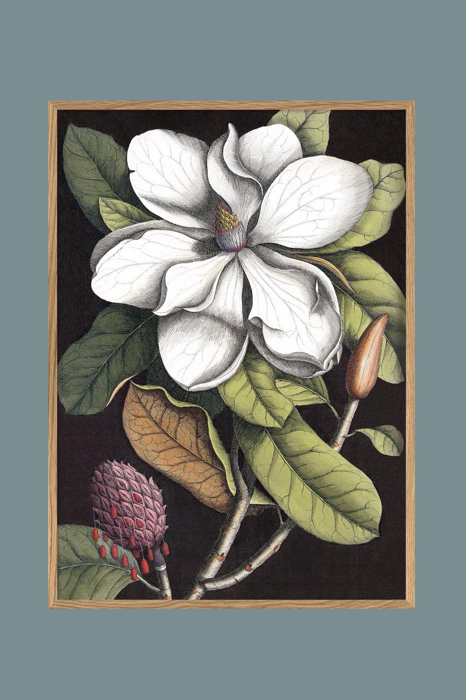 White Magnolia 50x70cm