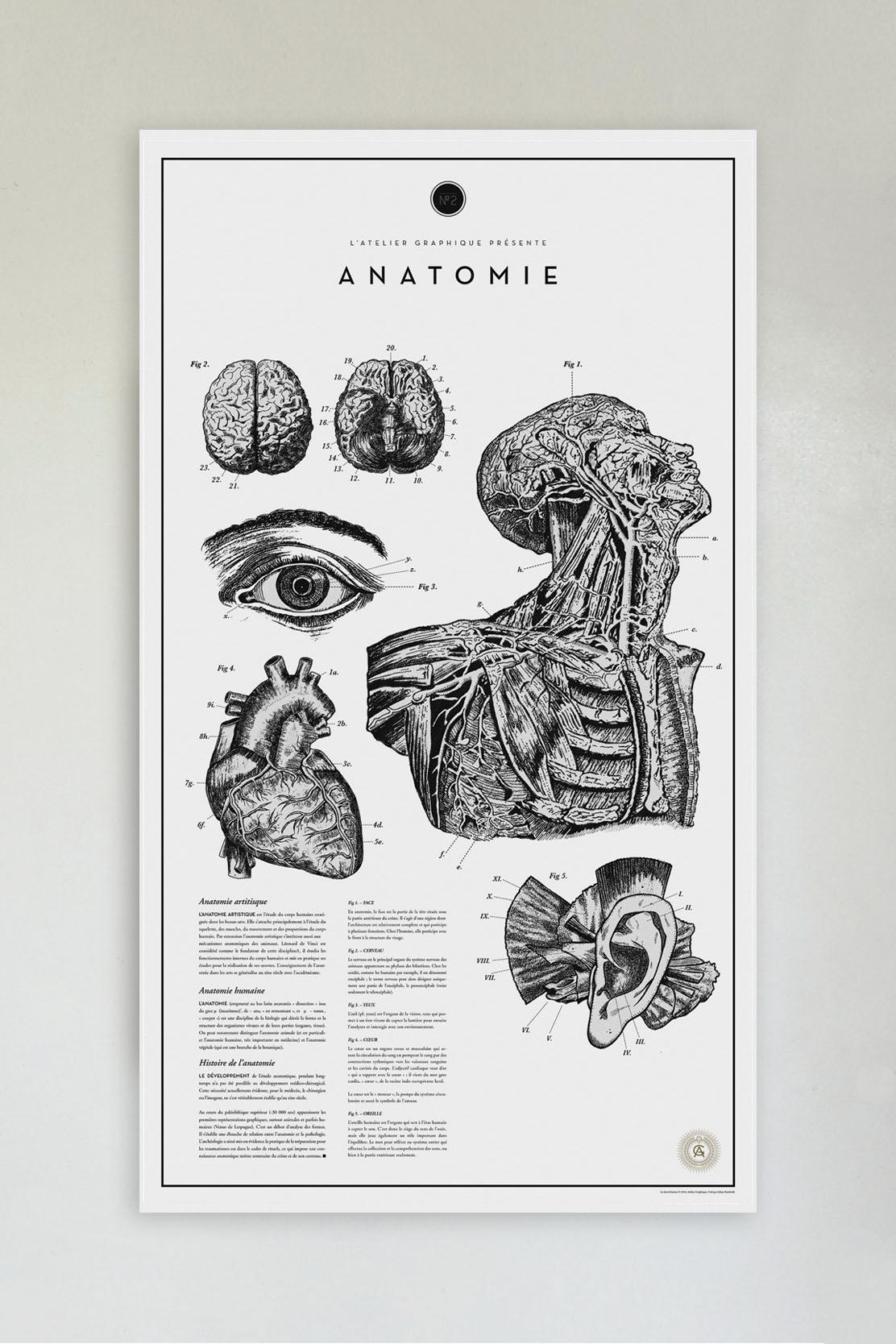Anatomie No. 2