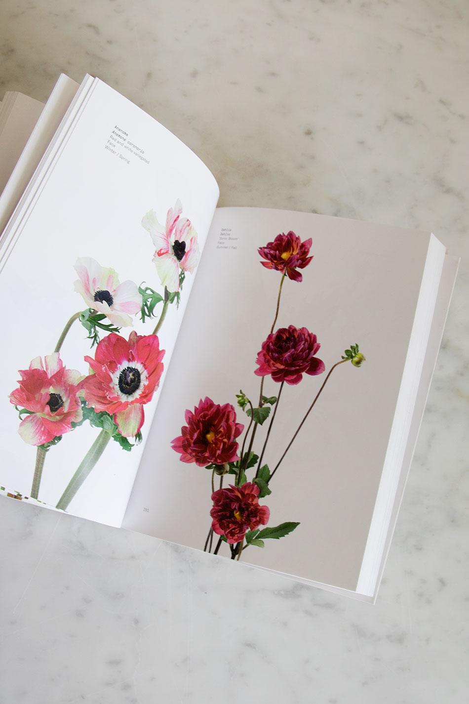 Phaidon | Flower Color Guide | TAMBURSTORE.SE